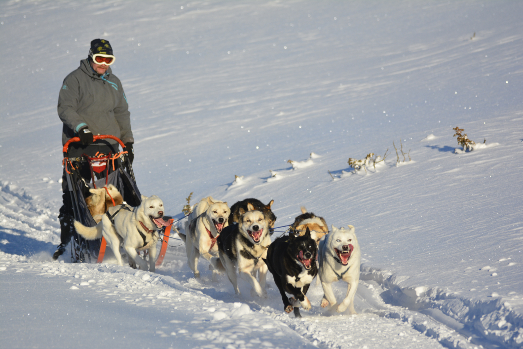 Dog sledding at Langedrag